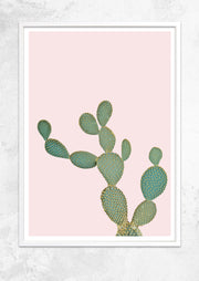 Opuntia Microdasys in Dusty Pink