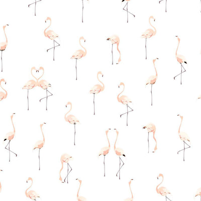 Pink Flamingos on White
