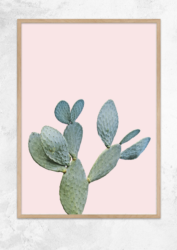 Prickly Pear in Dusty Pink