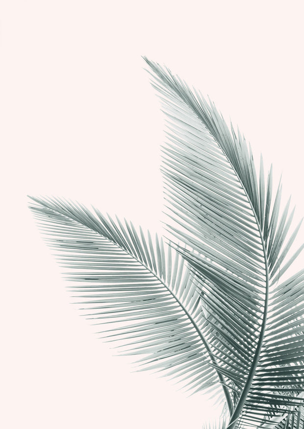 Silver Coconut Palms 2