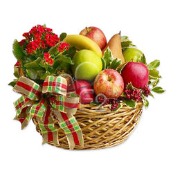 Hamper with Plant