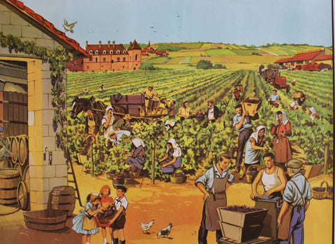 Vintage French School Poster - 'Grape Harvest' (Circa 1950s - 1960s)