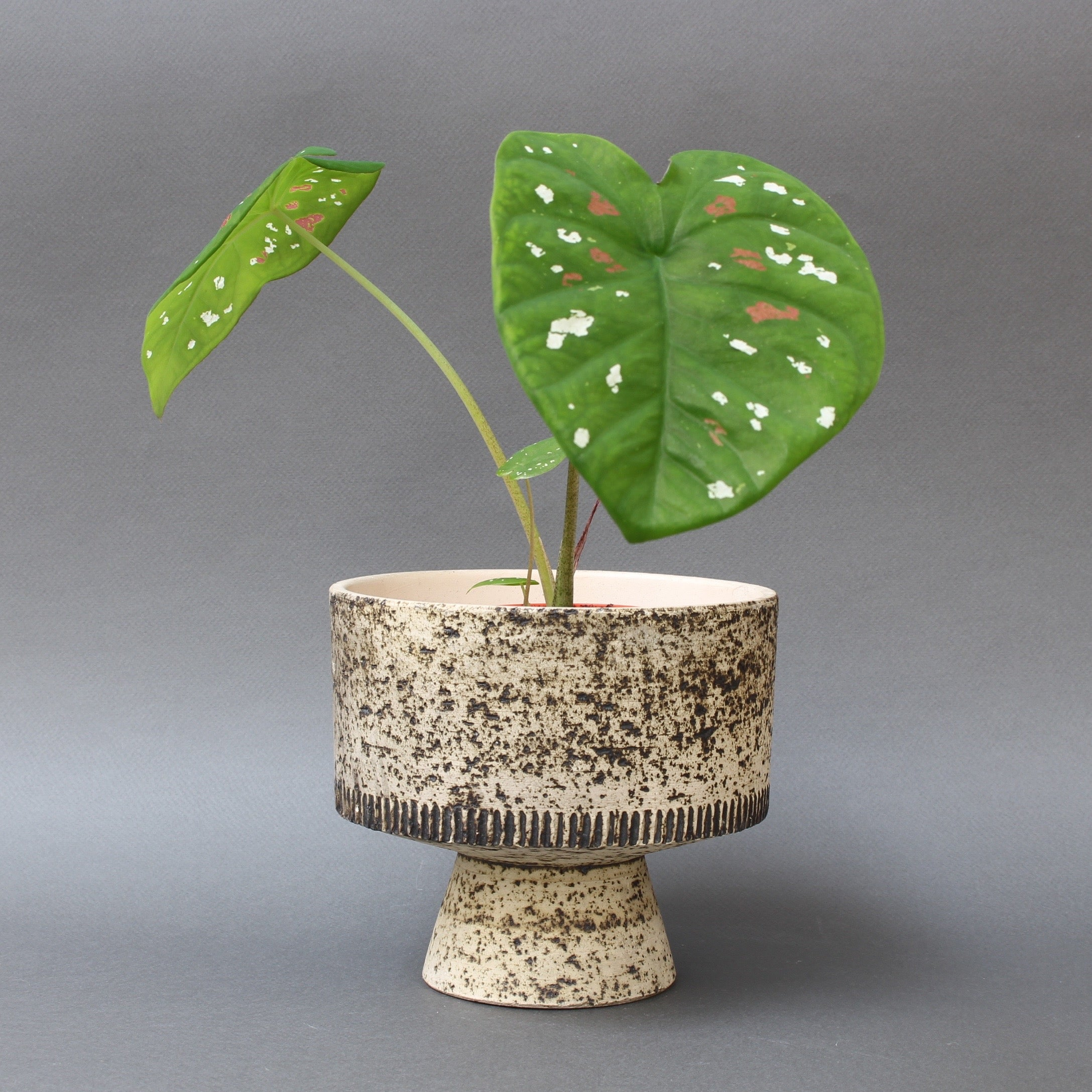 Mid-Century French Ceramic Plant Pot (Circa 1960s)