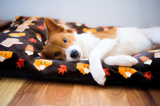 Dog Bed - Pumpkin Spice Basic Bitch Dog Pillow - Cute Cushion For Your Favorite Pup