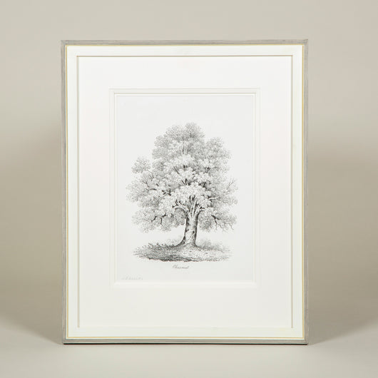 A set of six monochrome studies of trees by J.C. Deeley. Lithographs published in 1842 by J. & F. Harwood, London, in raised mounts and hand-painted frames. £955 each - £5,450.00 for the set.