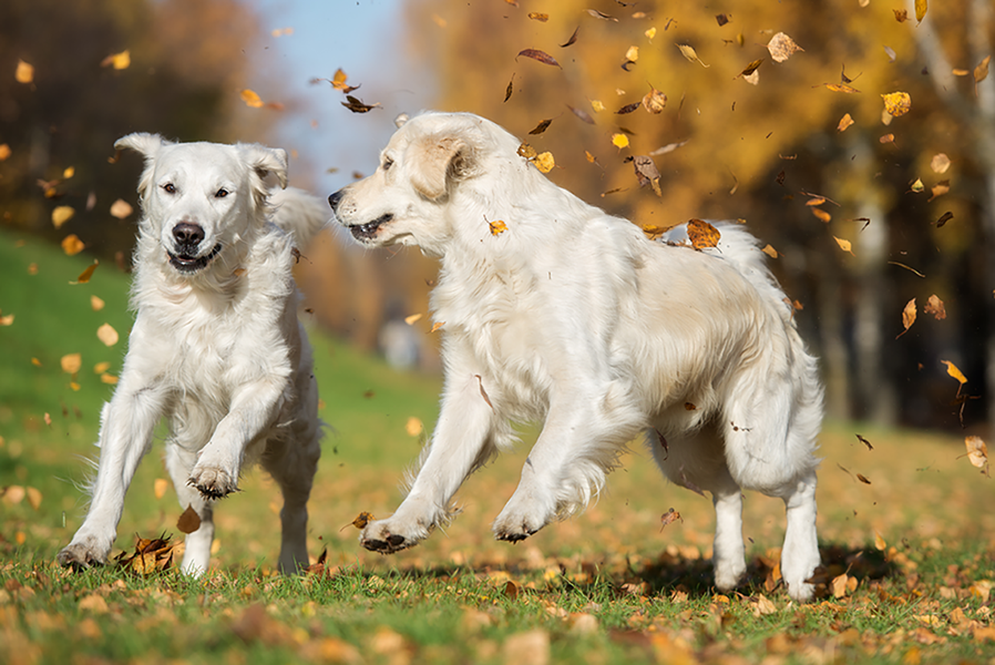 Why the Switch to Human-Grade Dog Food Can Give Your Dog a Healthier Life