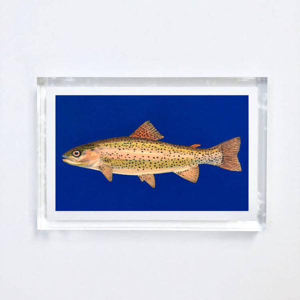 Trout Print With Acrylic Frame