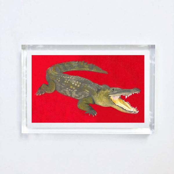 Alligator Print With Acrylic Frame