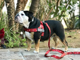 "Limited Edition ""HERE COMES SANTA PAWS!""  Adjustable Belt Harness (Custom patches sold separately) by dodidog.com - LARGE"