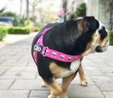 "NEW LIMITED EDITION! PINK ""BAD TO THE BONE"" - Adjustable Belt Harness"