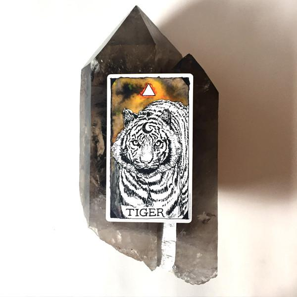 the wild unknown animal spirit tarot