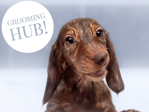 Visit the Grooming Hub
