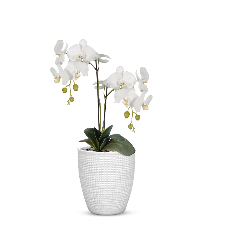 "ELEGANTE: Corteza - European Style Small Flower Pot Panna White (5.5""H.)"