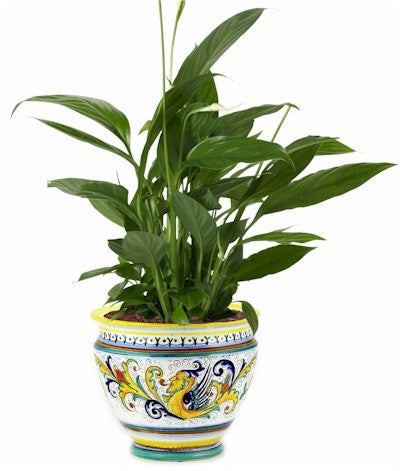 RAFFAELLESCO: Luxury Cachepot Planter Large
