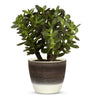 "ELEGANTE: Graffito Rustico Espresso Cream Ceramic Flower Pot Small (5.5"" H.)"