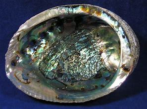 Abalone Shells - 3 oz