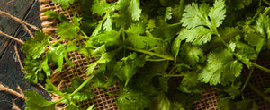 Cilantro, It's More Than Just A Taco Topping