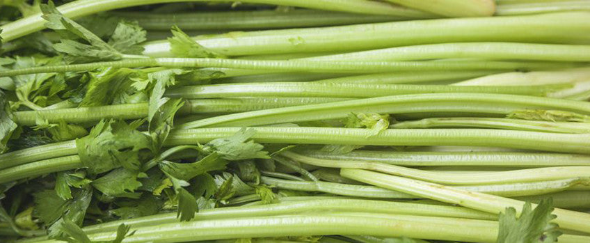 Growing Celery Crops in 100+ Days