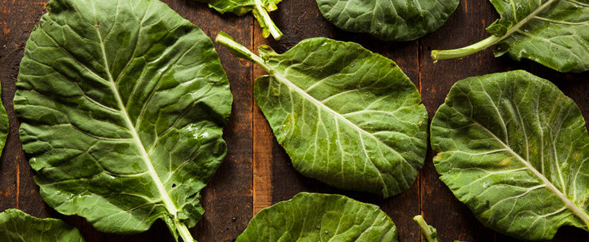 Growing Collards: Add Delicious Versatility to Your Garden