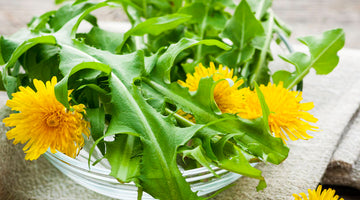 Everything You Need To Know About Growing Dandelions