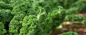 Growing Kale: You've Heard All About It, Now It's Time To Grow it.