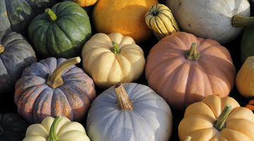 Growing Pumpkins From Seeds - Autumns Finest Fruits