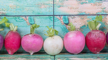 Growing Radishes: From The Garden To The Table Top