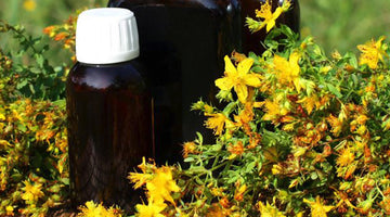 St. Johns Wort: Elevating Moods and Exorcizing Demons for 2000 Years