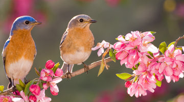 Planting Scrumptious Gardens for Backyard Birds