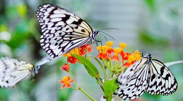 How (and Why) to Attract Butterflies and Moths to Your Garden