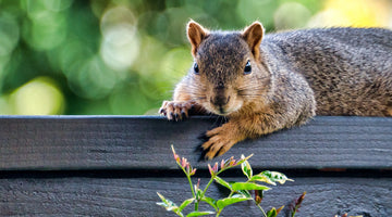 Repelling (and Exorcising) Rabbits and Squirrels from Your Garden