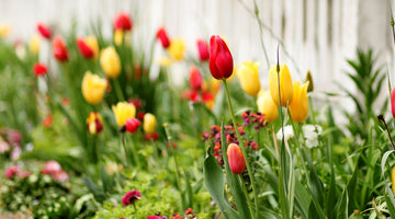 Growing Bulbs for a Well-Rounded Garden