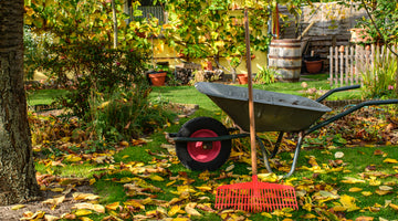 11 Fall Projects for Successful Spring Gardening