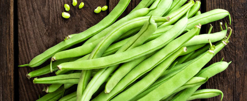 Growing Bush Beans
