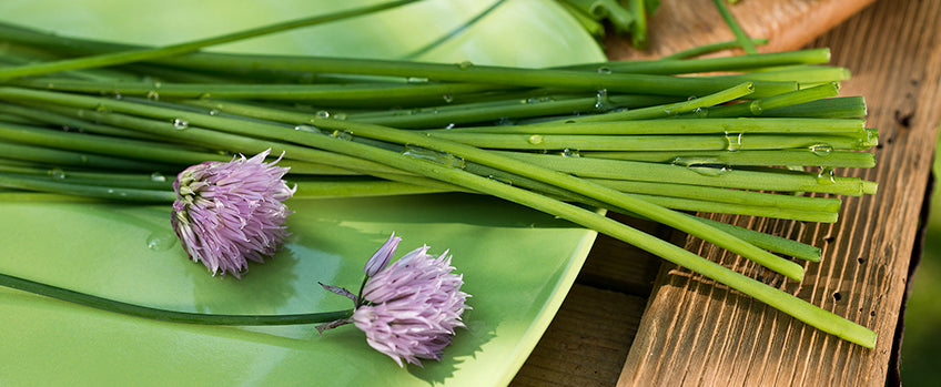How to Grow Chives: