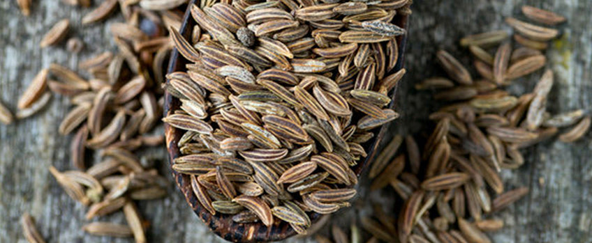 Growing Cumin