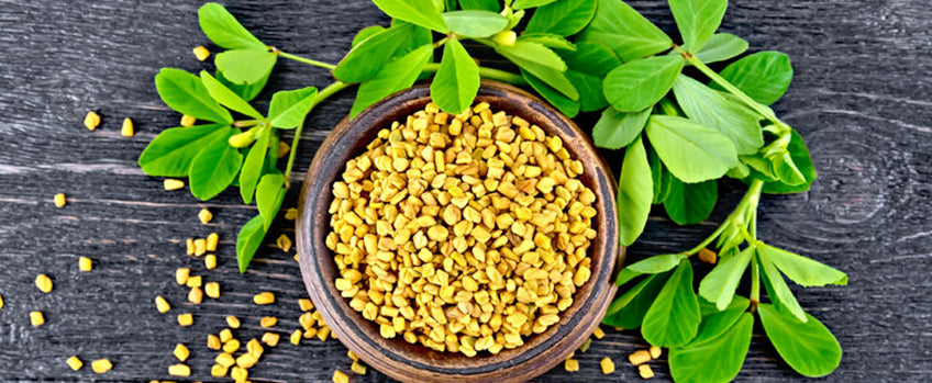 How To Grow Fenugreek - Guide To Growing Fenugreek Fundamentals Explained
