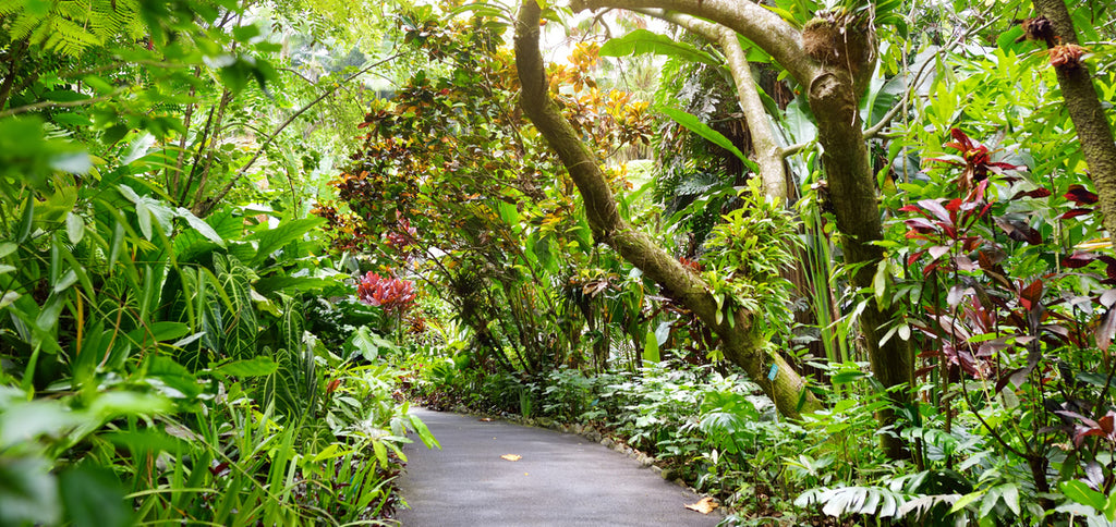 National Tropical Botanic Garden Hawaii