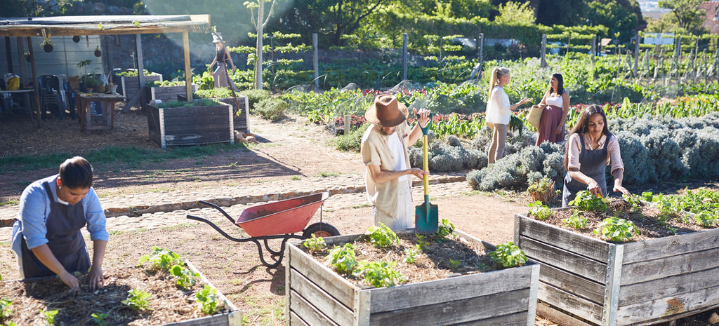 wide shot gardeners working on community garden