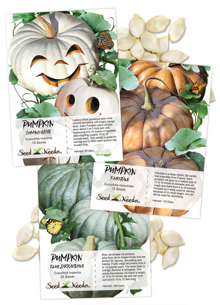 Specialty Pumpkin Seed Collection