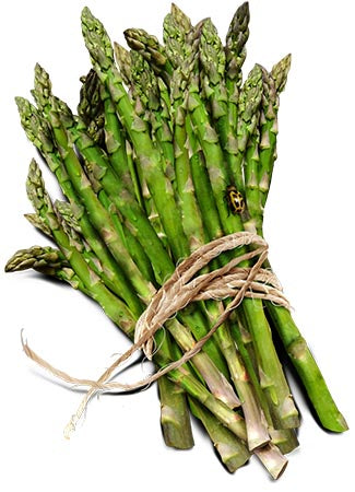 Mary Washington Asparagus Seeds (Asparagus officinalis)