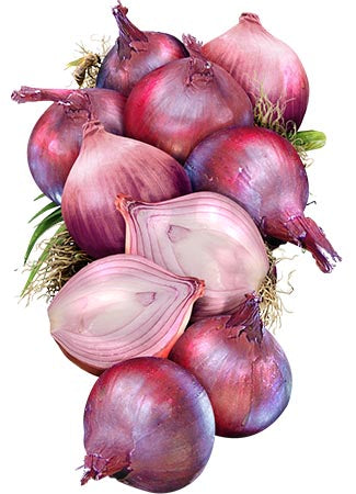 Red Burgundy Onion Seeds (Allium cepa)