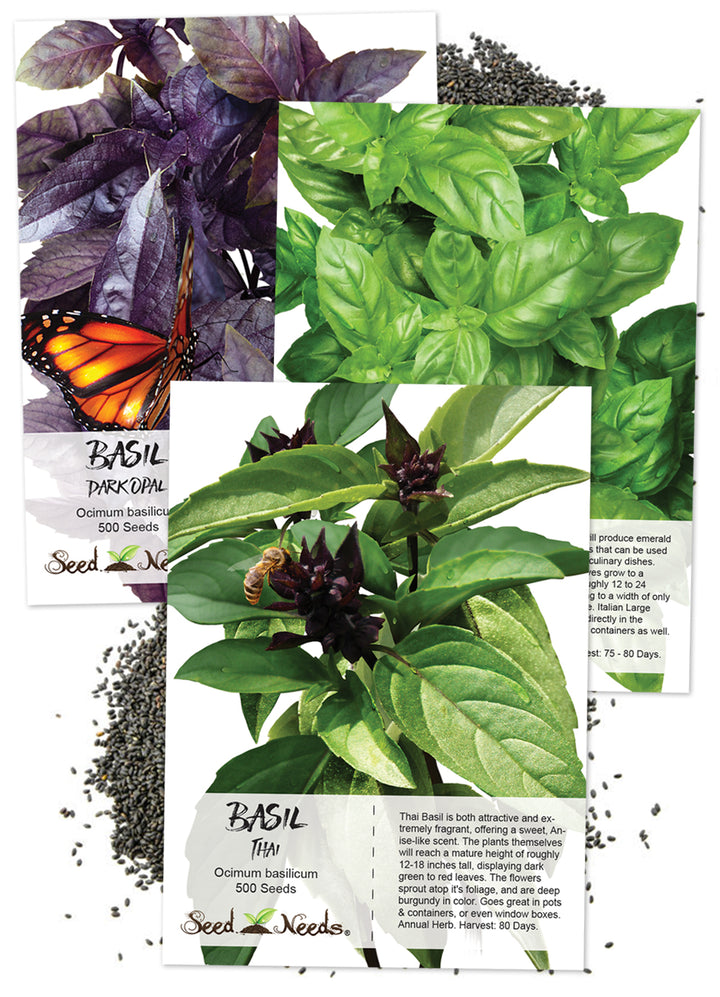 Basil Herb Seed Collection