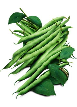 Kentucky Blue Pole Bean Seeds (Phaseolus vulgaris)