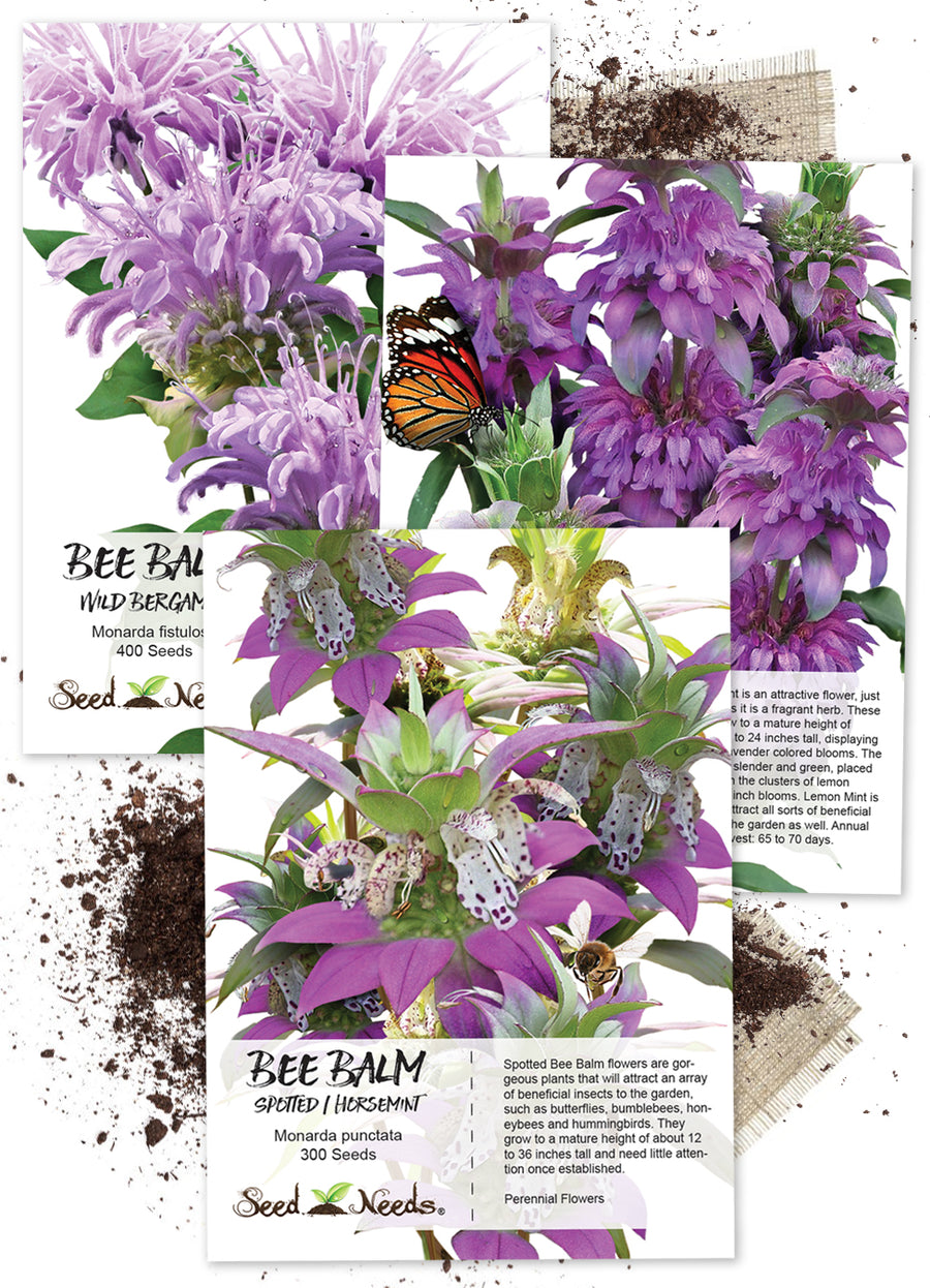 bee balm seed collection