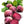 Detroit Dark Red Beet Seeds (Beta vulgaris)