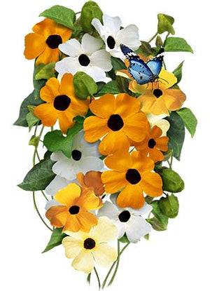 Black-Eyed Susan Vine - Mixed Colors (Thunbergia alata)