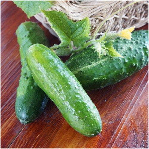 Boston Pickling cucumber