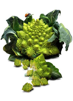 Romanesco Broccoli Seeds (Brassica oleracea)