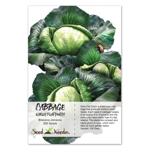 Early Flat Dutch Cabbage Seeds (Brassica oleracea)